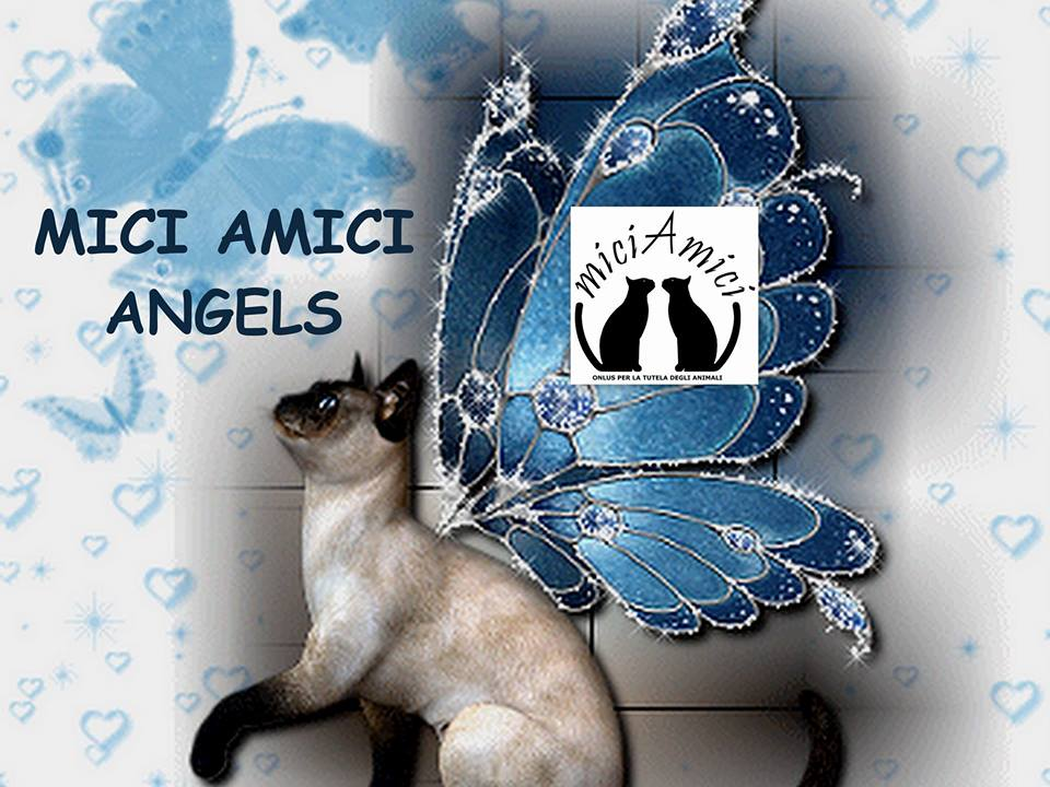 MiciAmici Angels