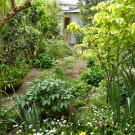 MiciAmici - Il giardino