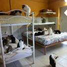 MiciAmici - La stanza dei letti