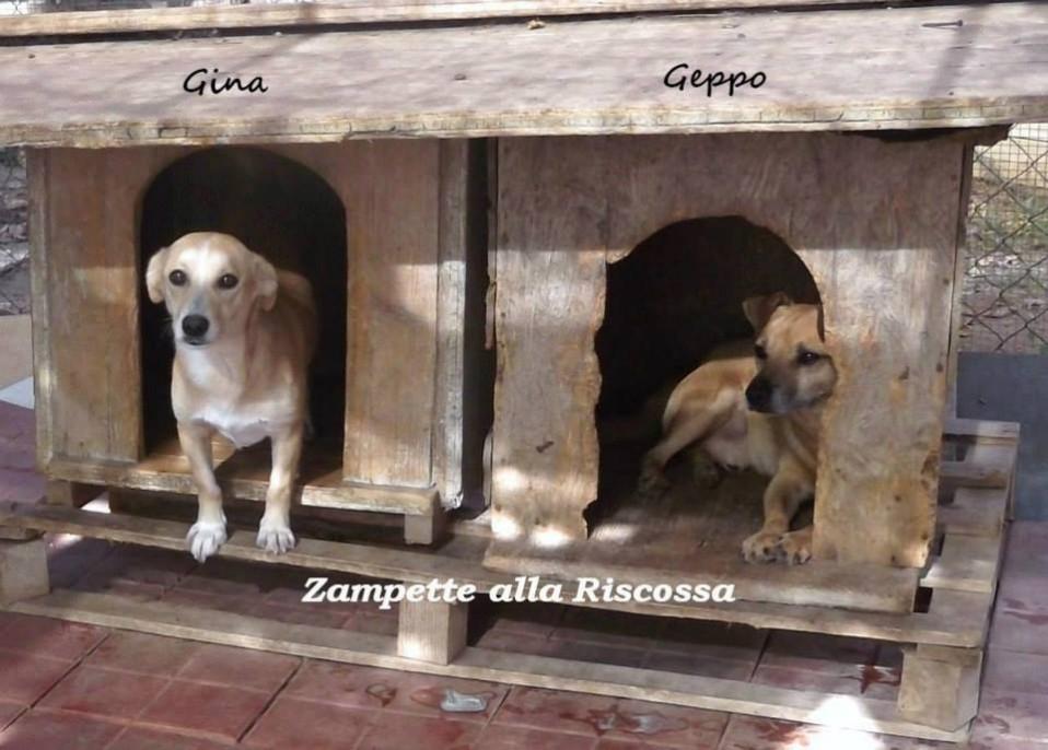 Gina e Geppo