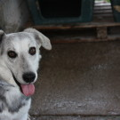 Cucciolo (7)